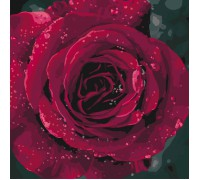 "Картина. ""Троянда"" 40*40см KHO3038"