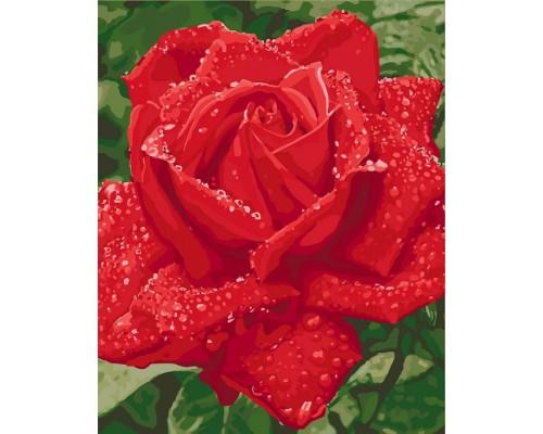 """Картина. """"Ніжність троянди"""" 40*50см KHO3045"""