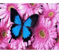 "Картина. Rainbow Art ""Метелик на хризантемах"" GX34056-RA"